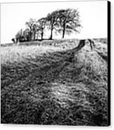 Trees On A Hill Canvas Print by John Farnan