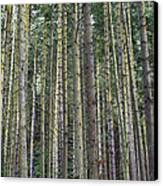 Trees Trees And More Trees Canvas Print by Jeff Swanson