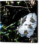 Trio Of Orchids Canvas Print by Shawn Lyte