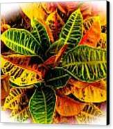 Tropical Croton Vignette Canvas Print by Lisa Cortez