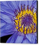Tropical Day Flowering Waterlily Canvas Print