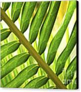 Tropical Leaf Canvas Print by Elena Elisseeva