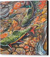 Trout Stream Canvas Print by Jenn Cunningham