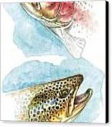 Trout Study Canvas Print