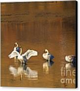 Trumpeter Ballet Canvas Print by Mike  Dawson