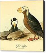 Tufted Puffins Canvas Print by Philip Ralley