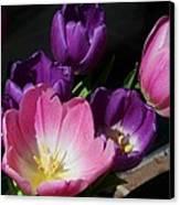 Tulip Bouquet 1 Canvas Print by Marcus Dagan