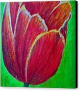 Tulip In Bloom Canvas Print by Kat Poon