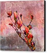 Tulip Tree Budding Canvas Print by J Larry Walker