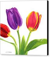 Tulip Trio Canvas Print by Sarah Batalka
