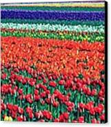 Tulipomania Canvas Print by Benjamin Yeager