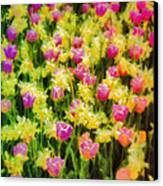 Tulips And Daffodils Canvas Print by Jill Balsam