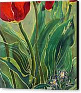 Tulips And Pushkinia Canvas Print by Anna Lisa Yoder
