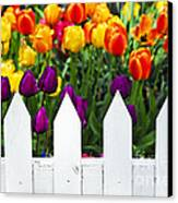Tulips Behind White Fence Canvas Print by Elena Elisseeva