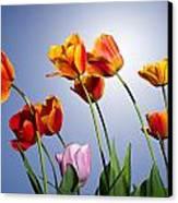 Tulips In Sun Light Canvas Print