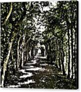 Tunnel Of Trees ... Canvas Print