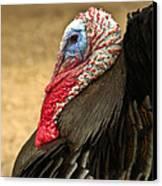 Turkey Time Canvas Print by Carolyn Marshall