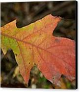 Turn A Leaf Canvas Print by JAMART Photography
