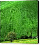 Tuscan Hills 05 Canvas Print by Giorgio Darrigo