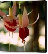Twin Fuchsias Canvas Print