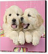Twin White Labs In Pink Basket Canvas Print by Greg Cuddiford