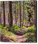 Twisp River Trail Canvas Print