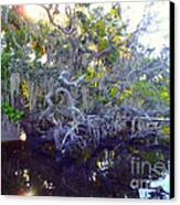 Twisted Tree Canvas Print by Carey Chen
