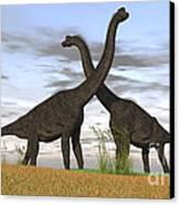 Two Large Brachiosaurus In Prehistoric Canvas Print by Kostyantyn Ivanyshen