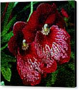 Two Orchids Canvas Print by Elizabeth Winter