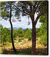 Two Pine Trees Canvas Print by Carlos Caetano