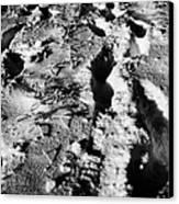 two sets of fresh footprints crossing deep snow in field Forget Saskatchewan Canada Canvas Print by Joe Fox