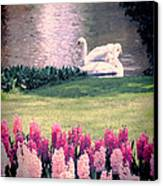 Two Swans Canvas Print by Jasna Buncic
