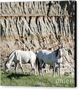 Two Wild White Stallions Canvas Print by Sabrina L Ryan