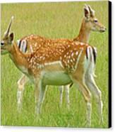 Two Young Deer Canvas Print by DerekTXFactor Creative