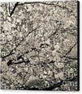 Under The Cherry Tree - Bw Canvas Print by Hannes Cmarits