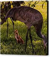 Under The Orange Tree Canvas Print by Zina Stromberg