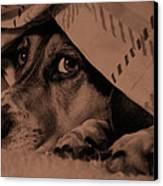 Undercover Hound Canvas Print