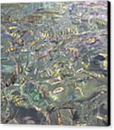 Underwater - Long Boat Tour - Phi Phi Island - 011326 Canvas Print