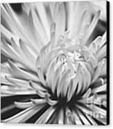 Unfolding Canvas Print by Artist and Photographer Laura Wrede