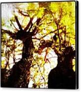 Untitled-twin Trees Canvas Print