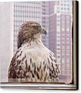 Urban Red-tailed Hawk Canvas Print