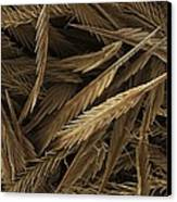 Urticating Hairs Of A Tarantula Canvas Print by Science Photo Library