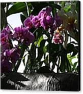 Us Botanic Garden - 121231 Canvas Print by DC Photographer