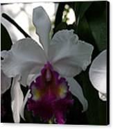 Us Botanic Garden - 121244 Canvas Print by DC Photographer