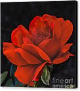 Valentine Rose Canvas Print by Robert Bales