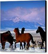 Valley Of The Wild Horses  Canvas Print by Jeanne  Bencich-Nations