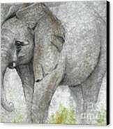 Vanishing Thunder Series-baby Elephant I Canvas Print