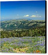Vast View And Lupine Canvas Print by Robert Bales