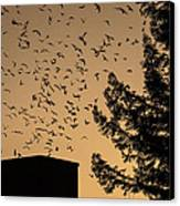 Vaux's Swifts In Migration Canvas Print by Garry Gay
