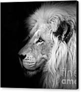 Vegas Lion - Black And White Canvas Print by Ian Monk